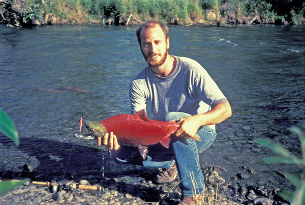 sockeye salmon (reds) - Russian River, AK (note sp...